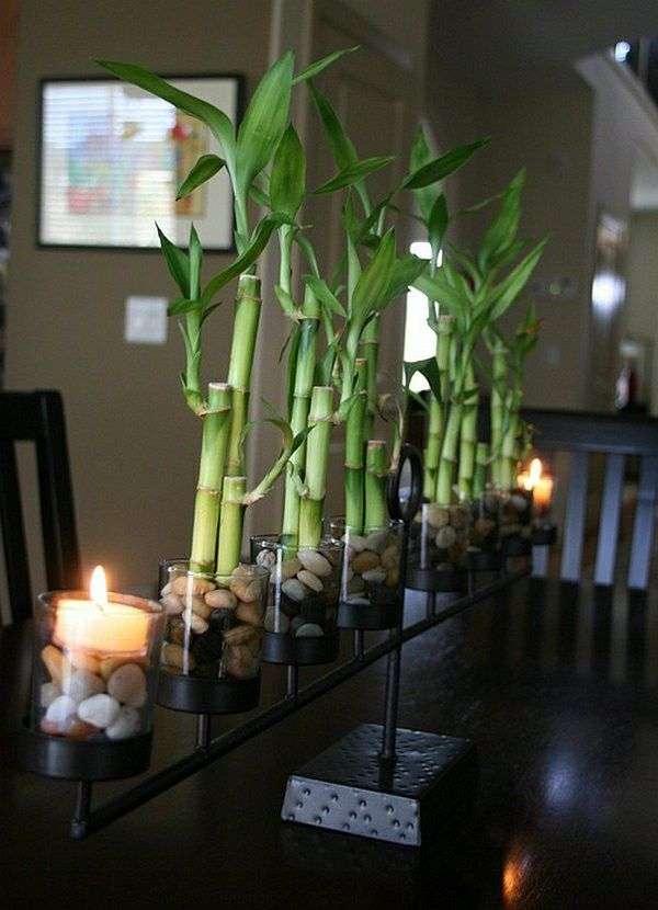 Кімнатна рослина бамбук (фото 48): догляд та розмноження