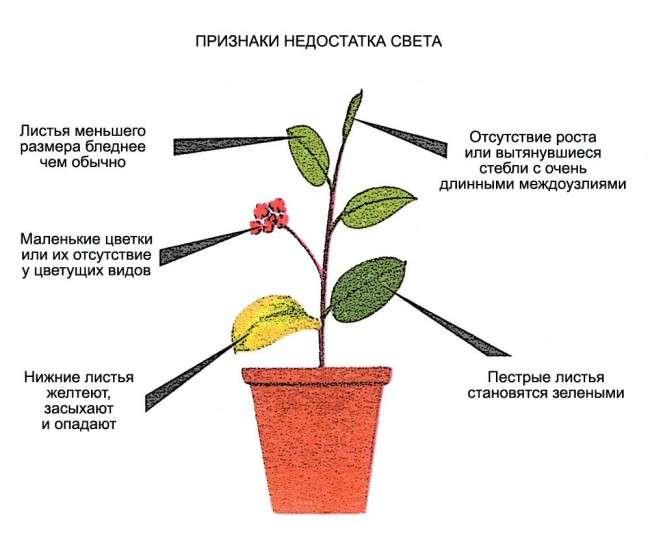 Лампи для рослин: 45 фото типів і поради, як вибрати відповідну