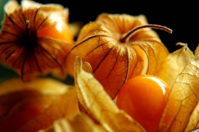 55+ фото Фізаліс — вирощування і грамотний догляд
