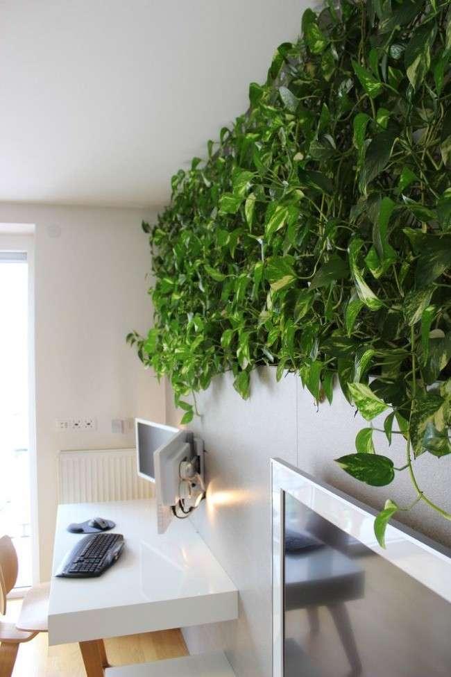 Кучеряві кімнатні рослини: чудова сімка
