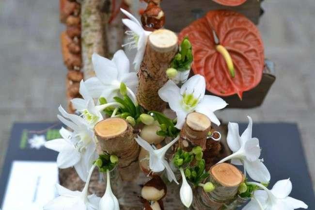 Амазонська лілія (еухаріс): як правильно доглядати