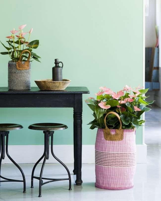 Які квіти не можна тримати вдома: 60 фото красивих, але небезпечних рослин, народні прикмети та наукові обґрунтування