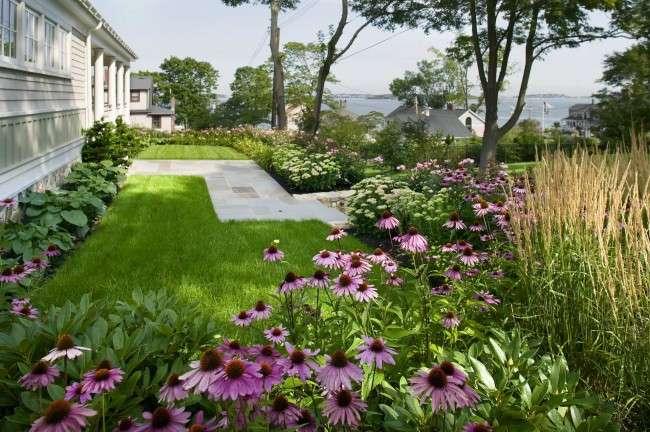 Багаторічні рослини (70 фото): Всі кращі сорти та ідеї для розкішного саду