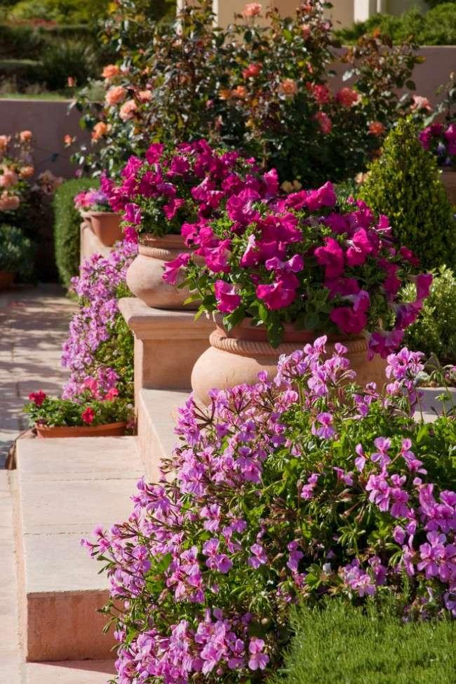 Осінні квіти в саду (65 фото з назвами): як перетворити ваш сад в райський куточок