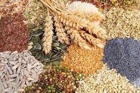 Як вибрати насіння хороших сортів овочів?